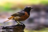 Birds - My   favorite shots