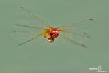 The best of Dragonflies