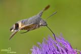 Eteroceri - Moths
