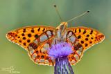 The best of Butterflies