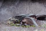 Disney's Animal Kingdom Discovery Island