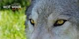 027_sedona-wolf-week-plan-b.jpg