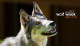 028_sedona-wolf-week-plan-b.jpg