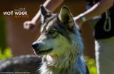 030_sedona-wolf-week-plan-b.jpg