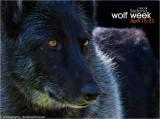 029_sedona-wolf-week-plan-b.jpg