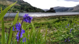 Blubelll at Eilean Donan castle