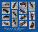 Headshield Slugs 2