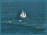 Sailing on the Bay.jpg