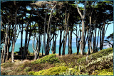 View from Lands End.jpg