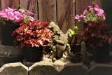 Garden Gnome.JPG