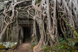 Ta Prohm - Door surrounded by roots