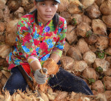 Worker in a plantation of coconuts - Mekong Delta