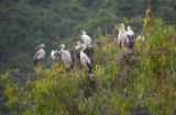 Birds - Ninh Binh