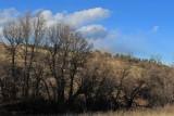 A Hillside of Gambel Oaks
