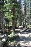 Paths, Trails, Even Roads