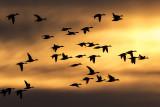 ducks 042017_MG_6115