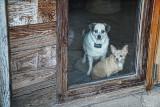 Unhappy Dogs
