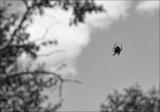 Spider On My Window