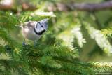 Oiseaux-Birds