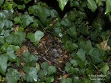 688-Hedgehog-winter-nest