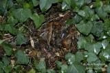 694-Hedgehog-winter-nest