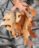 Leaf Peeping 0066 copy.jpg