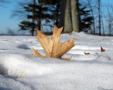 Leaf Peeping 3861 copy.jpg