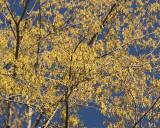 Leaf Peeping 09344 copy.jpg