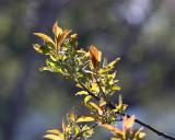 Leaf Peeping 09360 copy.jpg