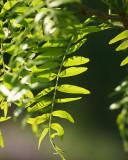 Leaf Peeping 2007- 2017