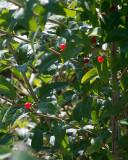 Leaf Peeping 8095 copy.jpg