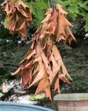 Leaf Peeping 8131 copy.jpg