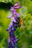 20170707 - Bee