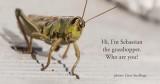 grasshopper - sprinkhaan