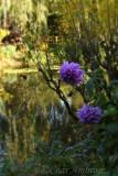 Blooms in the Water Garden