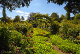 Monet's Garden 7569
