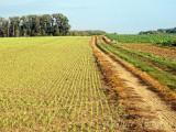 Fields in Auvers-sur-Oise
