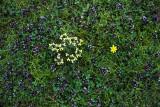 Spring ground