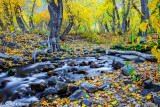 fall colors of a poetic creek