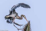 landing on top of palm tree