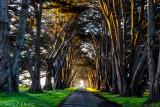 morning sun at cypress Tunnel