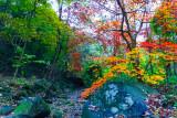 fall colors of a lyrical creek