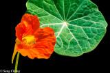 a leaf of flower