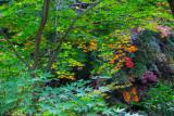 Tints of autumn at Mt. Mudeung