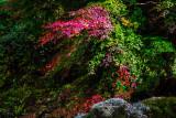 pastel colors of Mt. Mudeung