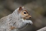 Washington Fauna