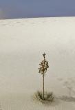 Plant against sand dune.