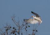 Lake City Wetlands Birders-7.jpg