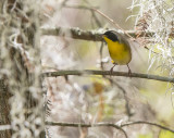 Lake City Wetlands birds.jpg