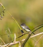 Lake City Wetlands Birders-5.jpg